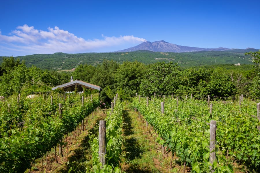 Wine Tourism in Italy